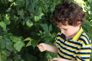 A child examines a leaf